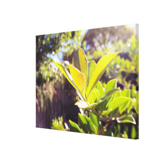 Leaves in Sun Nature Canvas Canvas Print
