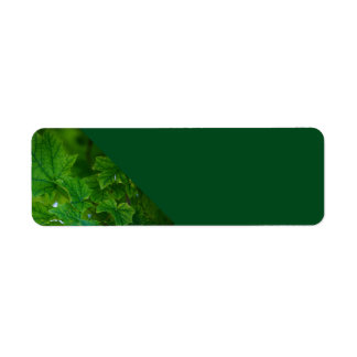 Leaves of Green Photo Address Labels