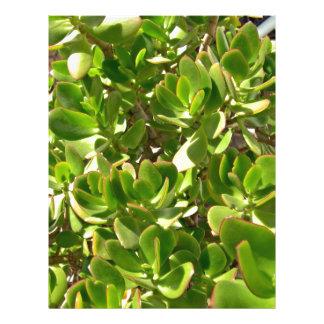 Leaves of Jade Plant 21.5 Cm X 28 Cm Flyer