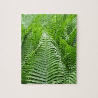 Leaves of Polystichum ferns Puzzle