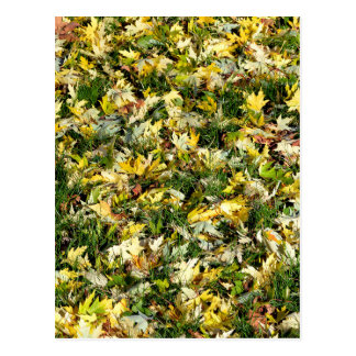 Leaves on grass post card