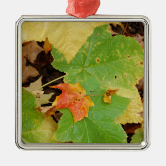 leaves on  the ground Zazzle.JPG Silver-Colored Square Decoration