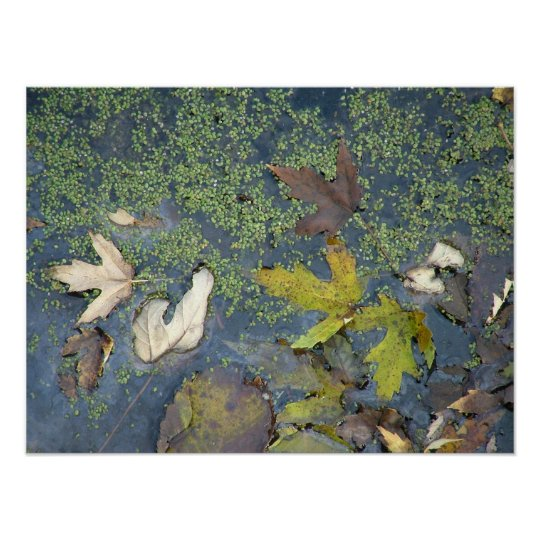 Leaves on water poster