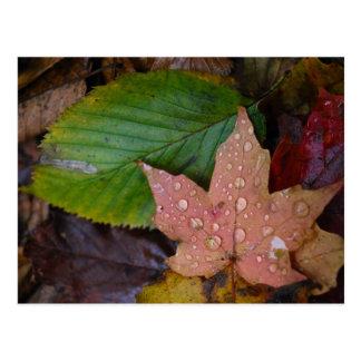 Leaves Postcard