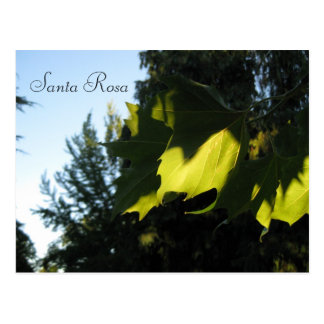 Leaves Postcard