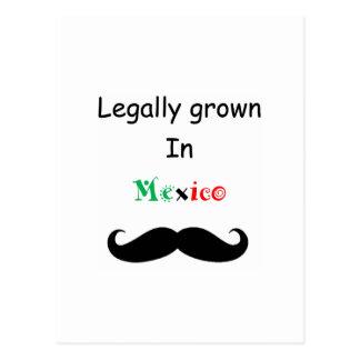 Legally Grown Postcard