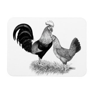 Leghorns Production Brown Chickens Rectangular Photo Magnet