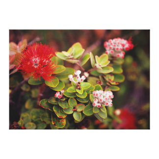 Lehua Blossoms In Hawaii Volcanoes Gallery Wrap Canvas