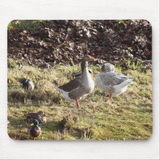 Leisure Ducks Mouse Pad