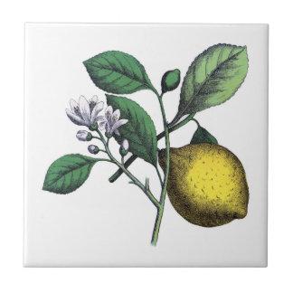 Lemon, fruit and flower small square tile