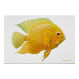 Lemon Gold Severum Cichlid Print