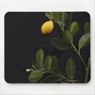 Lemons still on their Branch Mouse Pad