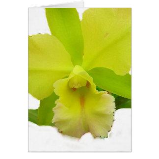 lemony Orchid Card