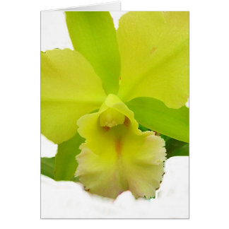 lemony Orchid Note Card