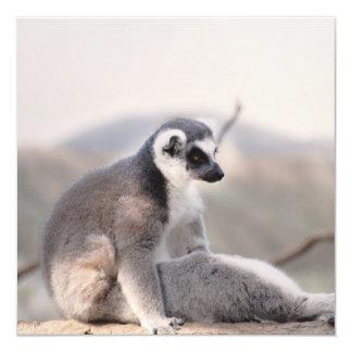 Lemur in Madagascar 13 Cm X 13 Cm Square Invitation Card