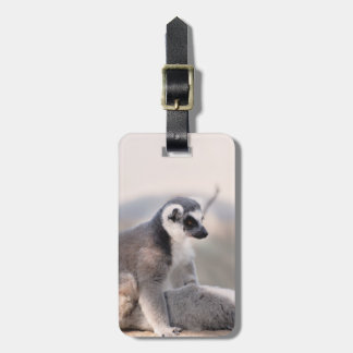 Lemur in Madagascar Bag Tag