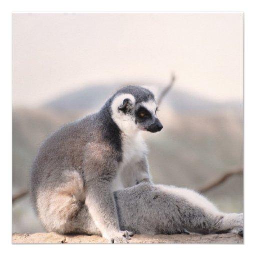 Lemur in Madagascar Personalized Invites