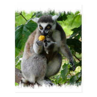 Lemur Postcard