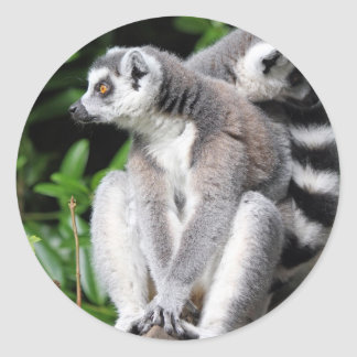 Lemur ring-tailed cute photo sticker, stickers