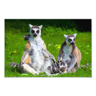 Lemurs Family Photo Print