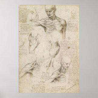 Leonardo Anatomical Drawing of Shoulder and Neck Poster