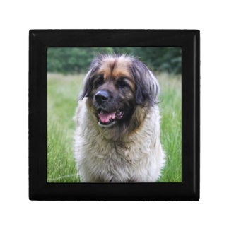 Leonberger dog gift box, jewelry box trinket box