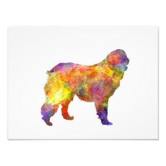 Leonberger in watercolor photo print