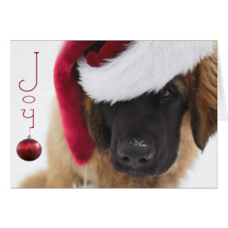 Leonberger puppy Christmas Card
