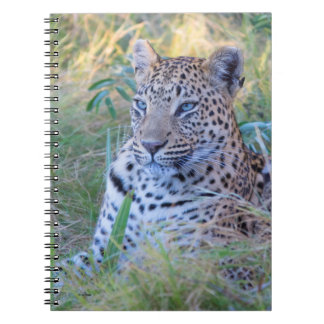 LEOPARD 29 JOURNAL