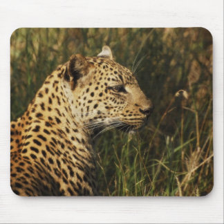 Leopard (alert & sitting up) wild animal mousepads