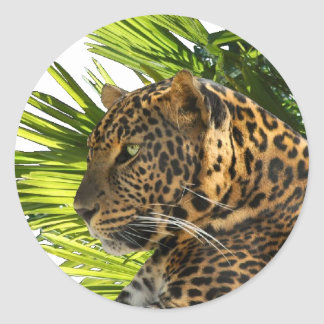 LEOPARD AND PALMS CLASSIC ROUND STICKER