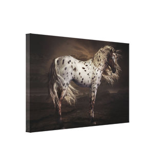 Leopard Appaloosa Stretched Canvas Print