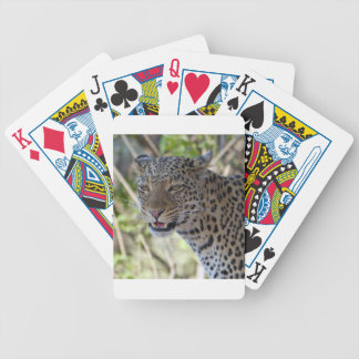 Leopard Cat Animal Africa Jungle Country Destiny Bicycle Playing Cards