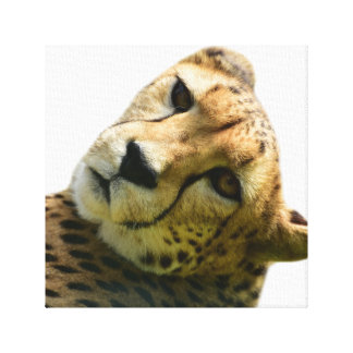 Leopard cheetah wild jungle animal photo canvas print