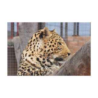 Leopard close-up canvas print