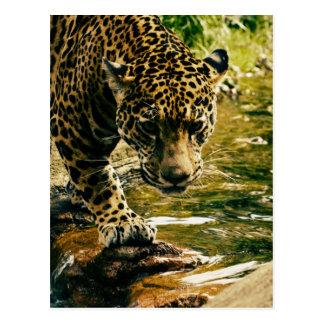 Leopard Crossing a Stream Postcard