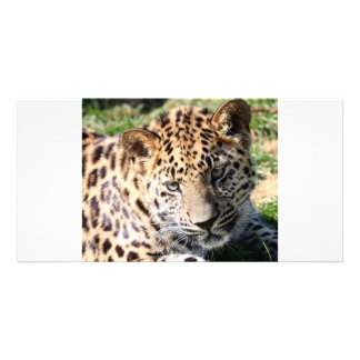 Leopard cub baby cute photo card, gift picture card