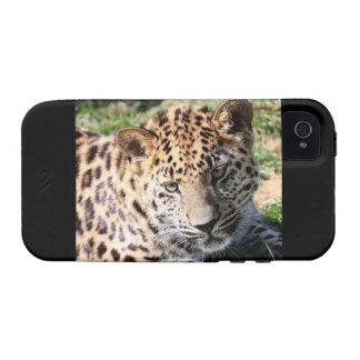 Leopard cub cute photo iphone 4 case mate tough