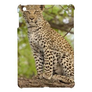 Leopard Cub on a Limb iPad Mini Covers