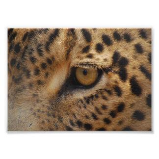 Leopard Eye Art Photo
