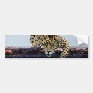 Leopard in the tree 1 bumper sticker