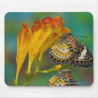 Leopard Lacewing tropical butterflies (Cethosia Mouse Pad