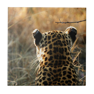 Leopard Looking Off Into Distance Small Square Tile