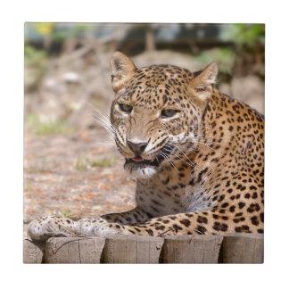 Leopard lying ceramic tile