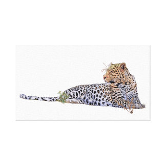 Leopard lying down canvas print