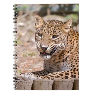 Leopard lying notebook