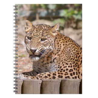 Leopard lying spiral notebook