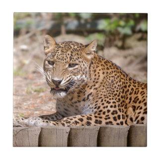 Leopard lying tile