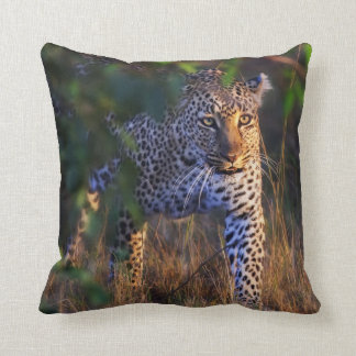 Leopard (Panthera Pardus) as seen in the Masai Cushion