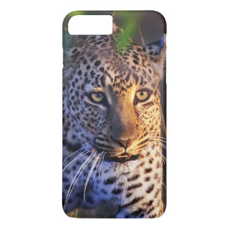Leopard (Panthera Pardus) as seen in the Masai iPhone 7 Plus Case